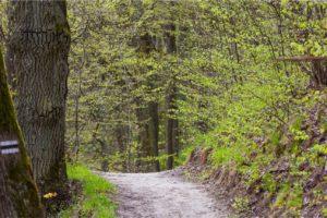 Uzdrowisko Lidzbark Warmiński park leśny ścieżka